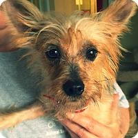 Adopt A Pet :: Fannie Mae - Green Bay, WI