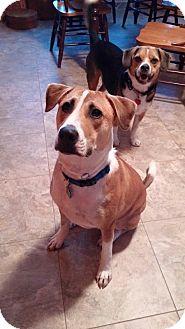 Labrador Retriever/Boxer Mix Dog for adoption in West Bend, Wisconsin - Blaze