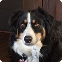 Adopt A Pet :: Annie - Garland, TX