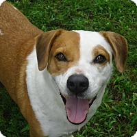 Adopt A Pet :: SPEEDY - Odessa, FL