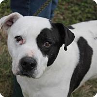 Adopt A Pet :: Petey - Chatham, VA