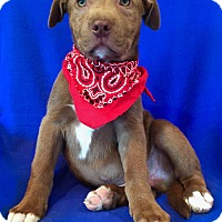 Adopt A Pet :: Green Lantern - Irvine, CA