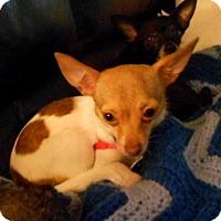 Adopt A Pet :: Gracie Mae - Beavercreek, OH