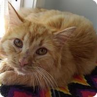 Adopt A Pet :: Red Bear - Waxhaw, NC