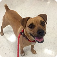 Adopt A Pet :: Rusty in CT - Manchester, CT