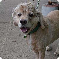 Adopt A Pet :: Bramble - Lafayette, IN