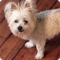 Adopt A Pet :: Daisy - Whitehouse Station, NJ