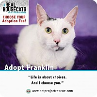 Adopt A Pet :: Franklin - Minneapolis, MN