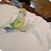 Adopt A Pet :: Baby - Los Angeles, CA
