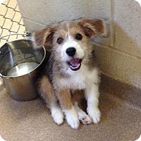 Adopt A Pet :: 1-12 - Triadelphia, WV