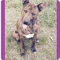 Adopt A Pet :: Zelda - Manchester, CT
