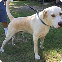 Adopt A Pet :: Talbert - Savannah, GA