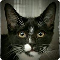 Adopt A Pet :: Conrad - Pueblo West, CO