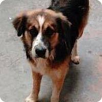 Adopt A Pet :: Mqverick - Southbury, CT