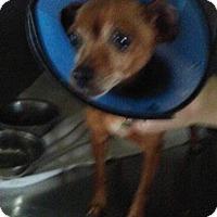 Adopt A Pet :: Tiny - cleveland, OH