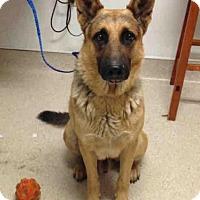 Adopt A Pet :: A1042510 - Bakersfield, CA