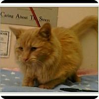 Adopt A Pet :: Tangee - Trevose, PA