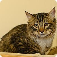 Adopt A Pet :: Gabriel - Gardnerville, NV