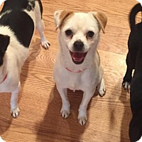 Adopt A Pet :: Duffy - Vacaville, CA