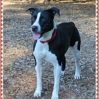 Border Collie Mix Dog for adoption in Marietta, Georgia - BRIDGET - Guest