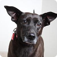Adopt A Pet :: Vivian  D162134 - Edina, MN