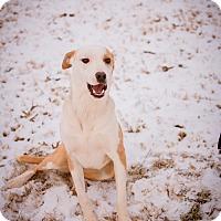 Adopt A Pet :: Noelle - Stillwater, OK
