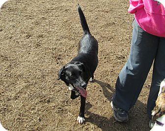 Border Collie Mix Dog for adoption in Starkville, Mississippi - Molly