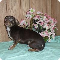 Adopt A Pet :: Teddy - Chandlersville, OH