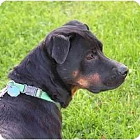 Adopt A Pet :: Bones - Rigaud, QC