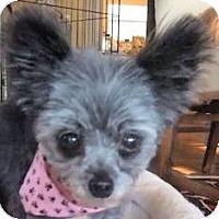 Adopt A Pet :: Jazzie - Mooy, AL