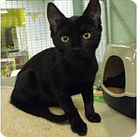 Adopt A Pet :: Licorice - Mission, BC