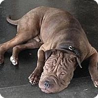 Adopt A Pet :: Elmer - Gainesville, FL