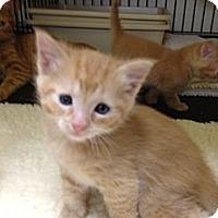 Adopt A Pet :: Chico - Monroe, GA