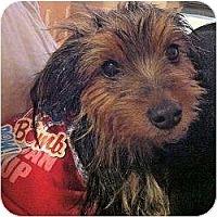 Adopt A Pet :: Mila - Miami, FL