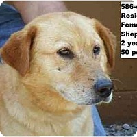 Adopt A Pet :: I.D. # 586-08 - ADOPTED! - Zanesville, OH