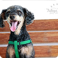 Adopt A Pet :: Pepper - Albany, NY