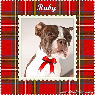 Boston Terrier Dog for adoption in Alabaster, Alabama - Ruby