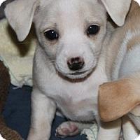 Adopt A Pet :: Peanut - La Habra Heights, CA