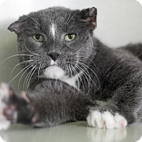 Adopt A Pet :: Friar Tuck - Chicago, IL