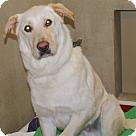 Adopt A Pet :: 19568 - Buster