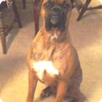 Adopt A Pet :: Zeke-Adopted! - Turnersville, NJ