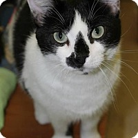 Adopt A Pet :: Shaniqua (foster home LOWELL) - Somerville, MA