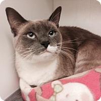 Adopt A Pet :: Asia - Herndon, VA