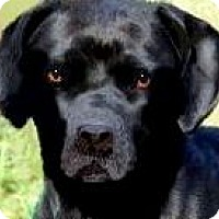 Adopt A Pet :: ROCKO(TWO GREAT BREEDS!!  WOW! - Wakefield, RI