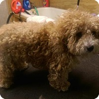 Adopt A Pet :: Ronnie - Bernardston, MA