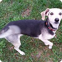 Adopt A Pet :: Blankey - Dayton, OH