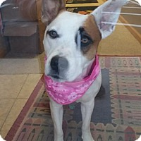 Adopt A Pet :: Emma - PENDING - Grafton, WI
