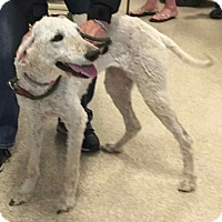 Adopt A Pet :: Audrey - Loudonville, NY
