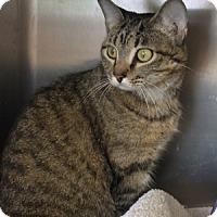 Adopt A Pet :: Halo - Naperville, IL