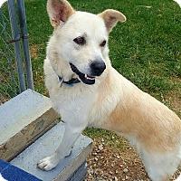 Adopt A Pet :: Anna - Manhasset, NY
